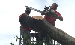 Tree Removal Miami FL