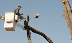 Graniteville Tree Services