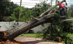 Tree Services Arlington TX