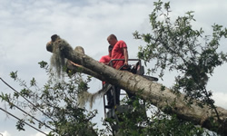 Tampa Tree Services