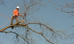 Tree Trimming Houston
