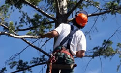 Tree Trimmers Curtis Bay
